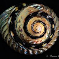 dramatic print of ocean shell on black