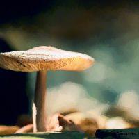 Mushroom art resembling a sombrero