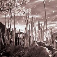mangrove roots at shore