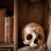 human skull and books photograph