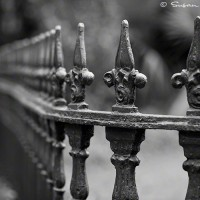 art print of vintage wrought iron fence