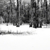 Infrared photo art print from South Carolina