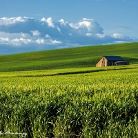 barn in field landscape print