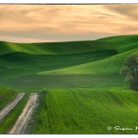 palouse farmland at sunset art photo