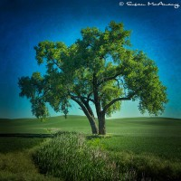 tree in field with texture art print