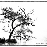 nature art black and white photo of tree in salt water