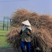 Vietnamese woman in field