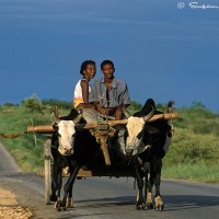 Madagascar couple in wagon art print