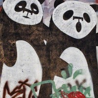 panda bear graffiti drawing photograph
