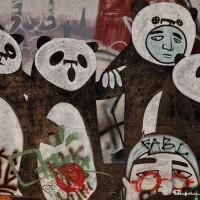 panda bears graffiti art photograph