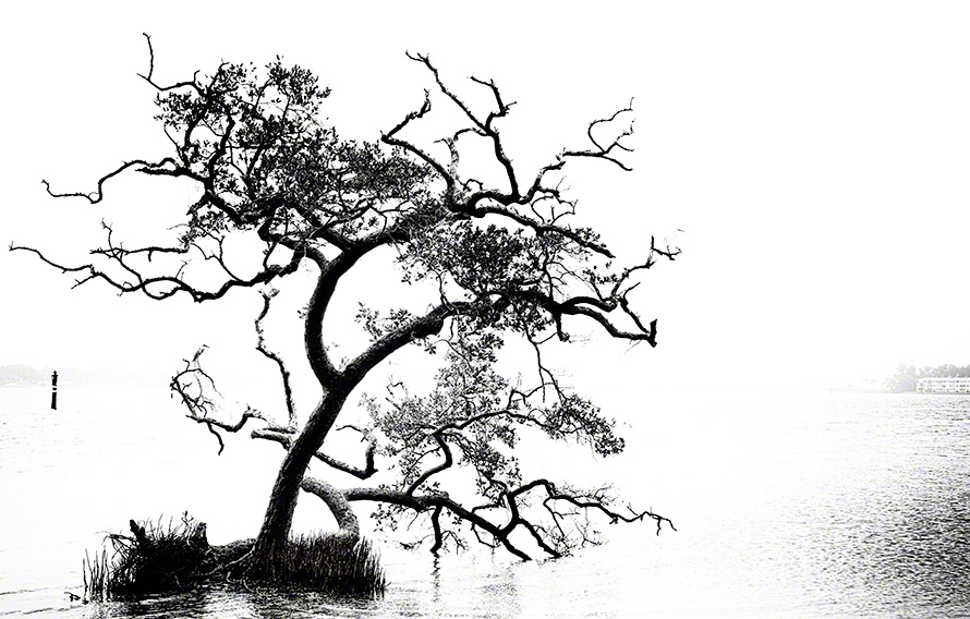 black and white coastal image art print