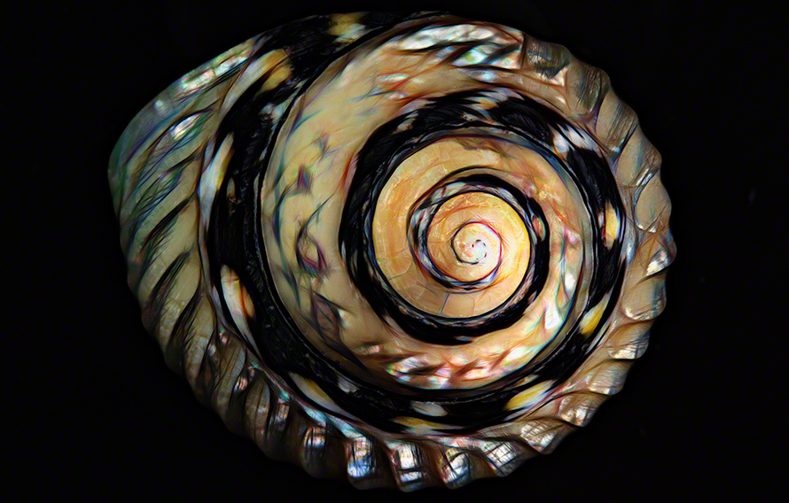 Decorative shell art print