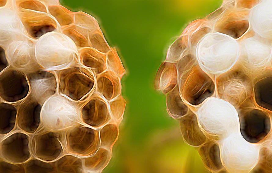 Colorful beehive photo art print