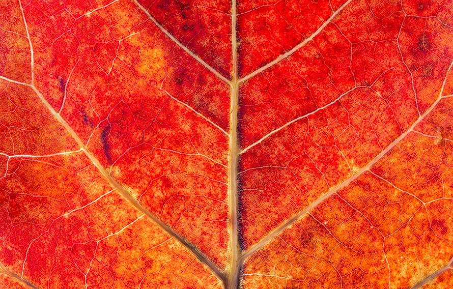 Cells of Sea Grape Leaf Print