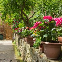 Tuscany architecture and garden