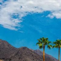 Palm trees in desert landscape
