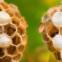 Abstract macro of beehive