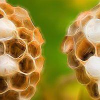 Abstract macro of beehive