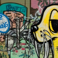 walrus graffiti art photograph
