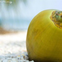 coconut at waters edge photograph