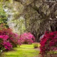 southern azealas garden