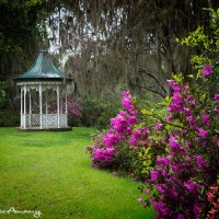 gazebo and azalea garden photo print