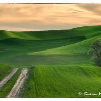 palouse farmland at sunset art photo