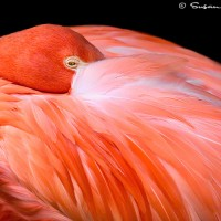 flamingo on black modern art