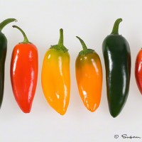 hot peppers on white art print