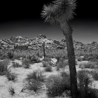 cactus in desert black and white print