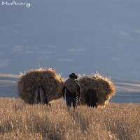 Peruvian farmer portrait art print