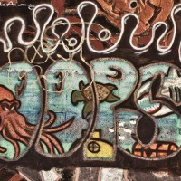 sea life graffiti drawing photograph