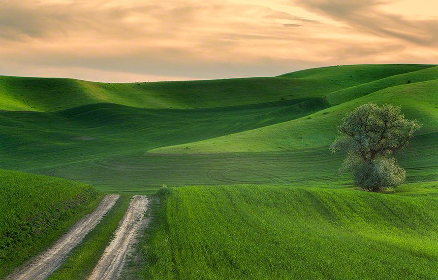 Palouse farmland landscape photo