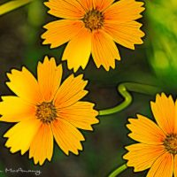 Wild flower abstract art
